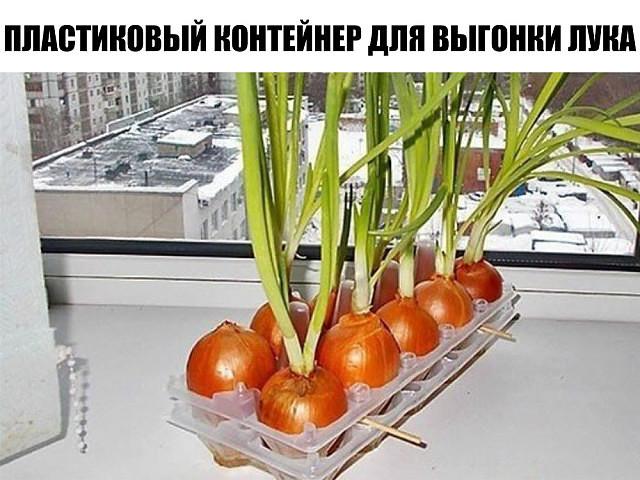 ПЛАСТИКОВЫЙ КОНТЕЙНЕР ДЛЯ ВЫГОНКИ ЛУКА. ПРОСТО! УДОБНО! Как вырастить лук на окне зимой