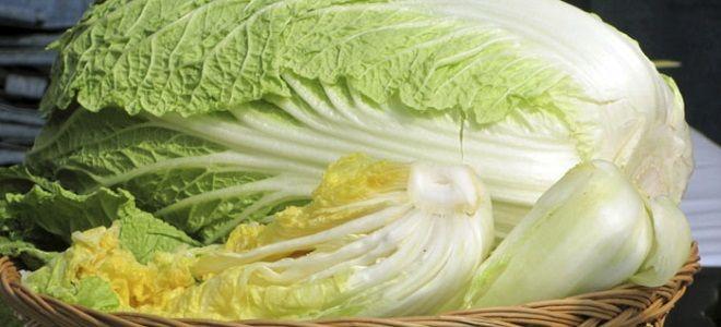 Пекинская капуста – 8 интересных рецептов приготовления на любой вкус!