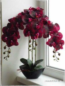 Как оживить засохшую орхидею?