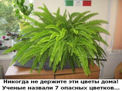 Никогда не держите эти цветы дома! Ученые назвали 7 опасных цветков!
