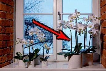 Если Вы дома держите искусственные цветы то Вам обязательно надо это прочитать 1