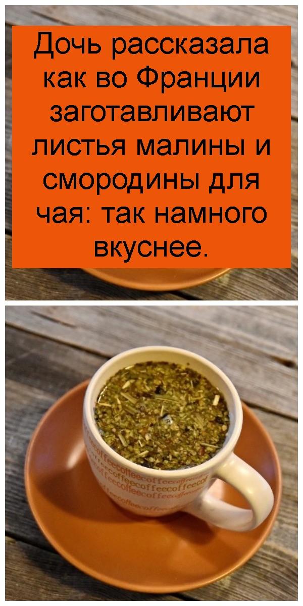 Дочь рассказала как во Франции заготавливают листья малины и смородины для чая: так намного вкуснее 4