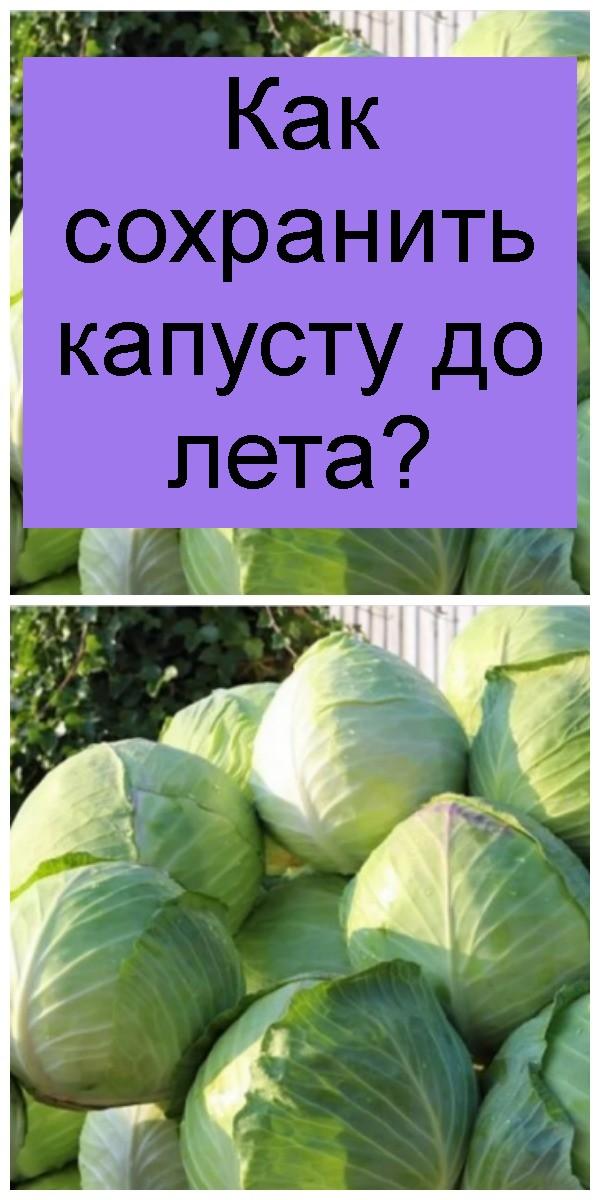 Как сохранить капусту до лета 4