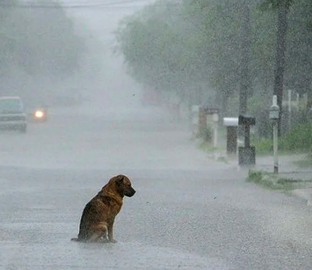 Возвращаясь с вызова мы заметили собаку, которая сидела посреди дороги и не пропускала нас 6